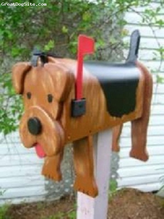 Airedale Terrier, 1, brown, Hello ,