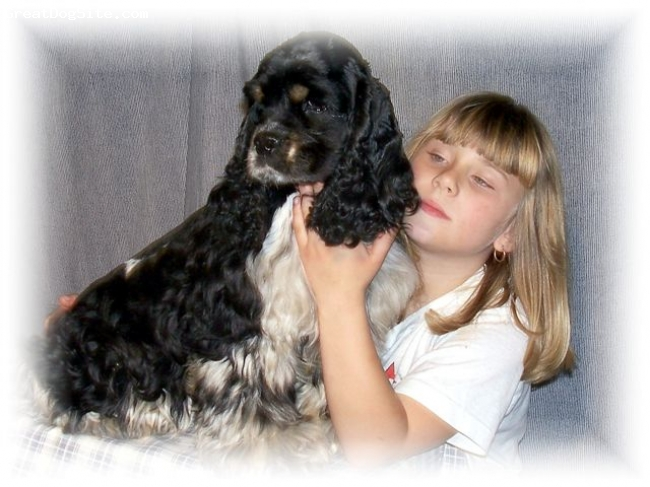Cocker Spaniel, 3, Blk/wht Tri, AKC Cocker Spaniel;  Uplords Here For The Party..  Sired by Champion RoadShows N Upords Wild West..  Pictured with his best friend Whitney