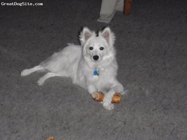 "American Eskimo Dog, 1.8 years old, White, White and very playful.  tremendously loyal.  I named my little girl by using two Native American words:  Hey is Athabaskan / Alaskan for ""Winter""; Wyakin is taken from the Nez Perce word for Spirit or Spirit Guide.  So Hey Wyakin is a play on words, if you will.  When I call ""Hey Wyakin, come over here and sit!""  I am actually calling her by her full name ""Winter Spirit, come over here and sit!""  I love her tremendously."