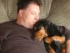 Basschshund, 1, brown/black