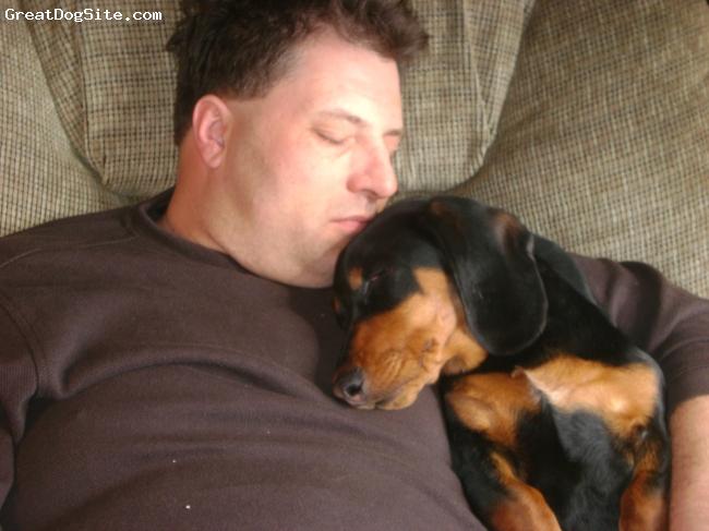 Basschshund, 1, brown/black, LOVE, LOVE, LOVE HOUND!!