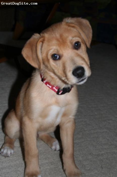 Beago, 2, blonde, Rescue dog
