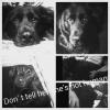 Borador, 4 years, black and white