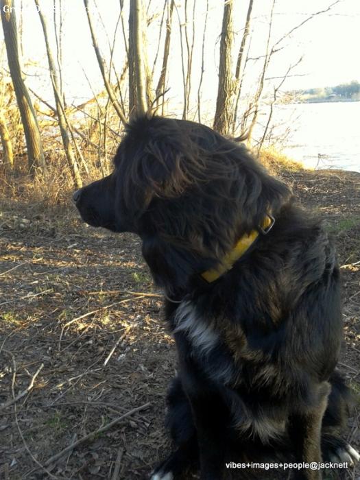 Borador, 9 month, black, -