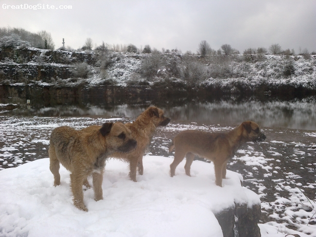 Border Terrier, 3, Red Grizzle, Taz,Tilly & Pepper in the snow