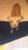 Bospin, 8 months, tan