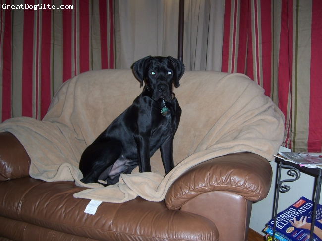 Boweimar, 8 months, black with white markings, Relaxing on the chair