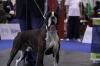 Boxer, 21 MONTH, TIGRAT