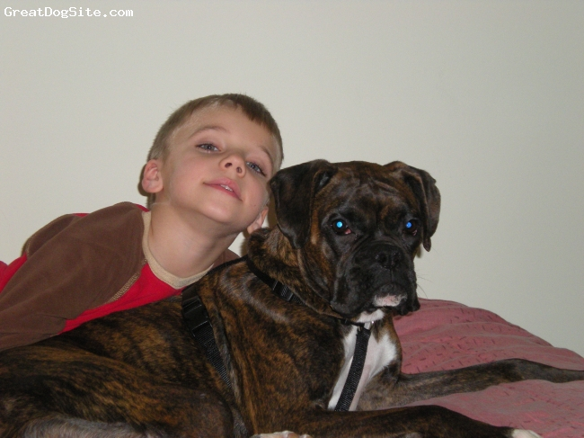 Boxer, 1 1/2, brindel, morgan is the best dog ever, she loves to be walked, she is so sweet and a lover! i couldn't asked for a beter dog!