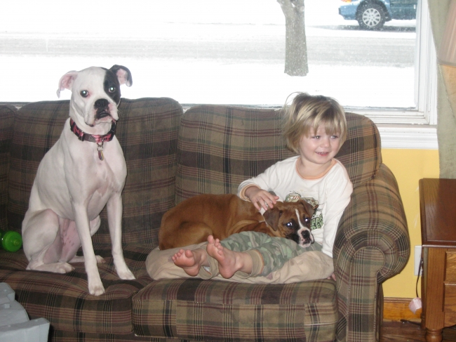 Boxer, 16 months and 3 months, white female and fawn female, Enjoys playing with each other and with the kids