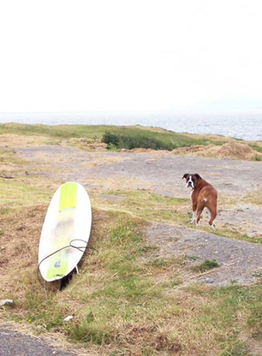 Boxer, 8, Fawn, Jenny going surfing!
