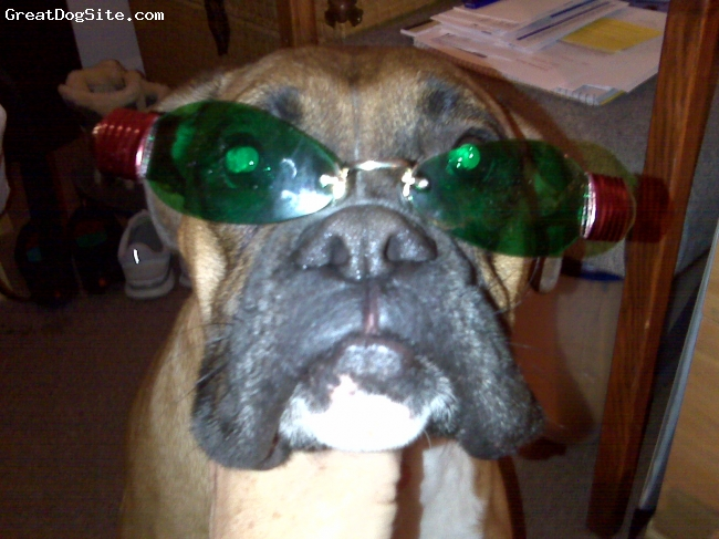 Boxer, 3 years, Fawn w/black mask, playful and a clown...makes me laugh a lot!
