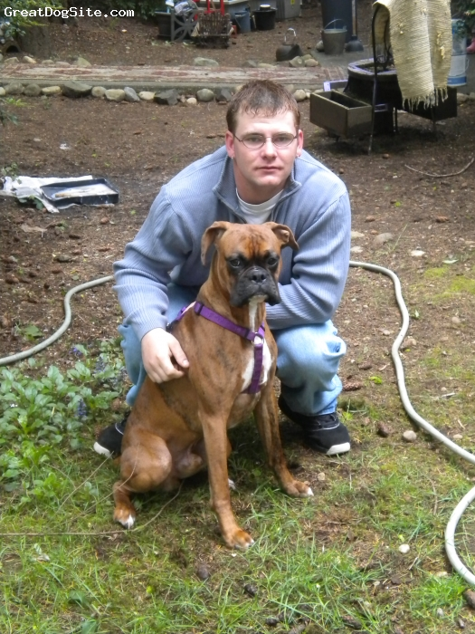 Boxer, 10 monthes, brendall, he is a loving dog good with kids of ages