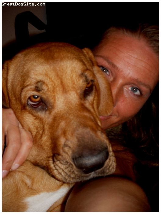 Broholmer, flika, brun, min hund