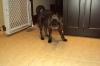 Brug, 10 months, Black