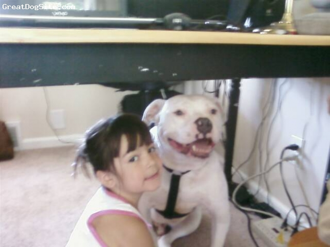 Bull-Boxer, 4yrs, white, sweet , smart,and funny!!