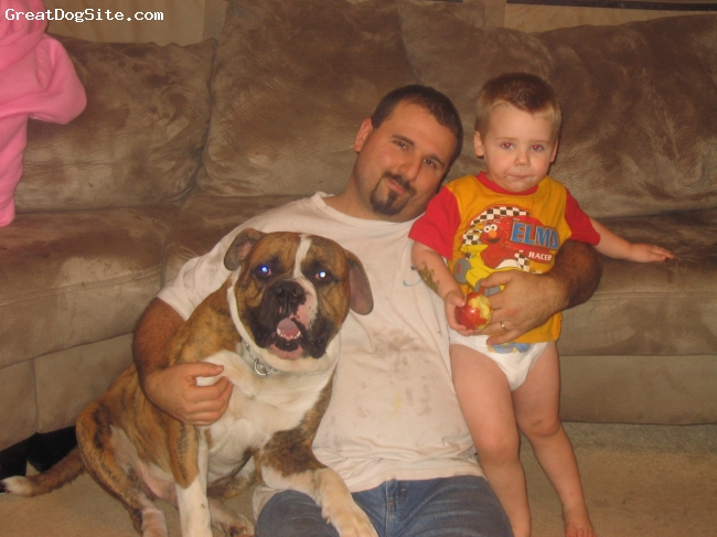 Bulloxer, 2yrs, Brindle, Here is Brocolli at 2 yrs. old with my son and husband . My son is two . He has put my dog through the ringer. He even tries to ride him at times. But Broc is still so gentle with him.