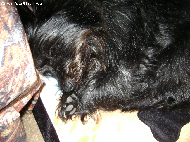 Carkie, 4, Black/ Silver, Sleepy Puppy