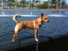 Carolina Dog, 4, Red