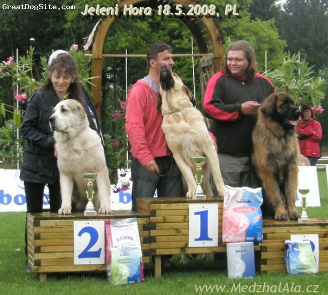 Central Asian Ovtcharka, 3y., white and fawn, 5x BOB, 3xCACIB, 4x Best of female, BIG 2, CHPL,
