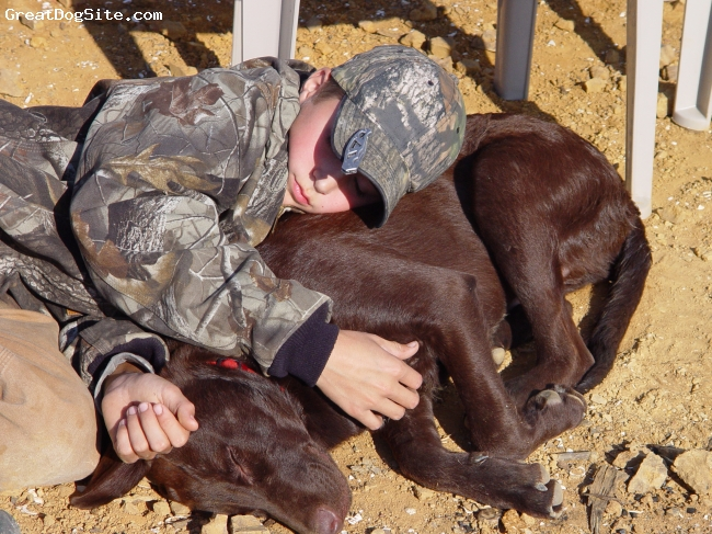 Chesador, 2, Choclate, Every boy needs a dog....