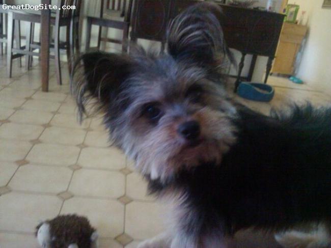 Chineranian, 3, Mixed, Very Sweet Dog