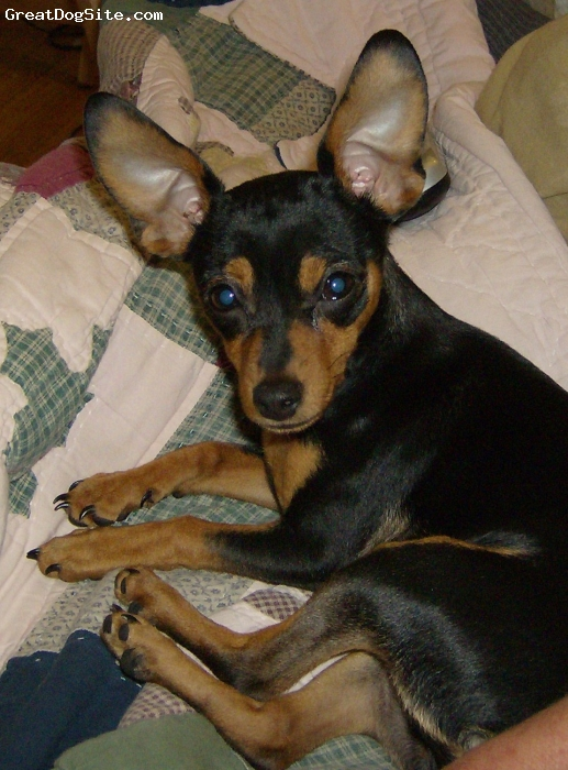 Chipin, 2 years, black and tan, Black and tan, spolied little girl