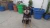 Chizer, 1year 2months, black&white coat; beige legs