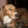 Cogol, 3 years old, Yellow