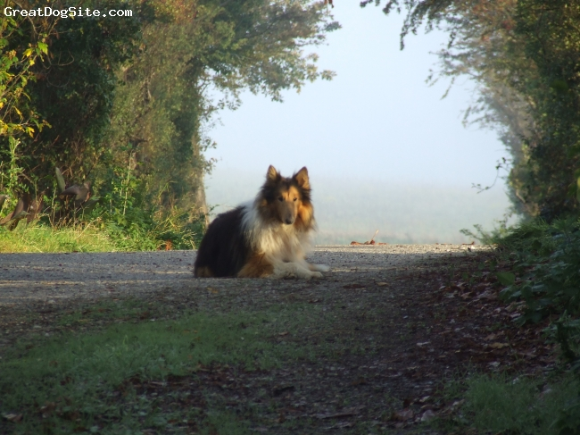 Collie, 9 or 11, TriColor, Duke was abandoned and we took him in he now has cataracts and is totally blind - we are hoping to save for an op for him within the nxt few months.  He sits here and waits for the school bus daily.  We adore him and he dances like a high stepper when we get home.