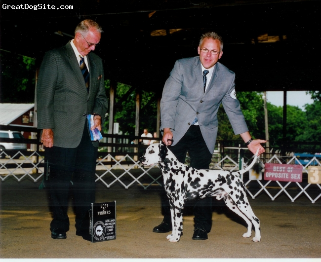 Dalmatian, 1-1/2, black and white, Loyal, playful, and energetic are the strong qualities of this family dog.  He is being shown with good results during the Summer or 2009.  To date he has earned 3 points towards the 15 needed for AKC championship.