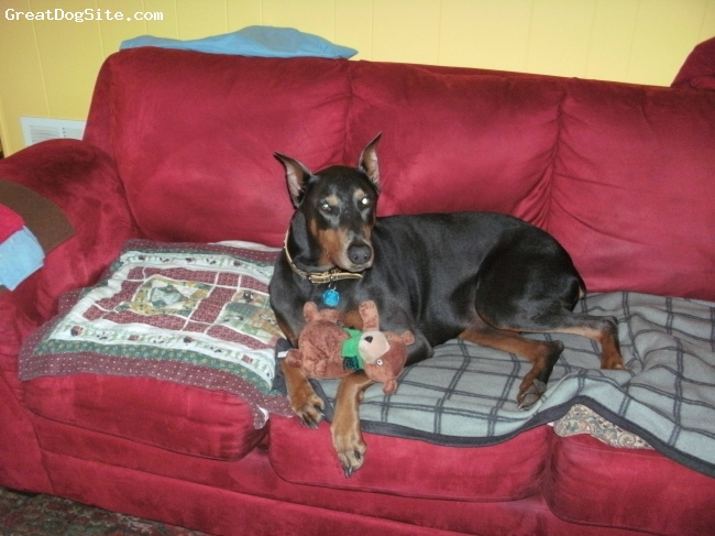 Doberman Pinscher, 4, Blue, The greatest and most wonderful dog we have ever had. Sheeba is so loving and caring. I love her with all of my heart.