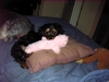 Dorkie, 5 mths, Black and Tan