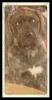 Doubull-Mastiff, 18 weeks, brindle