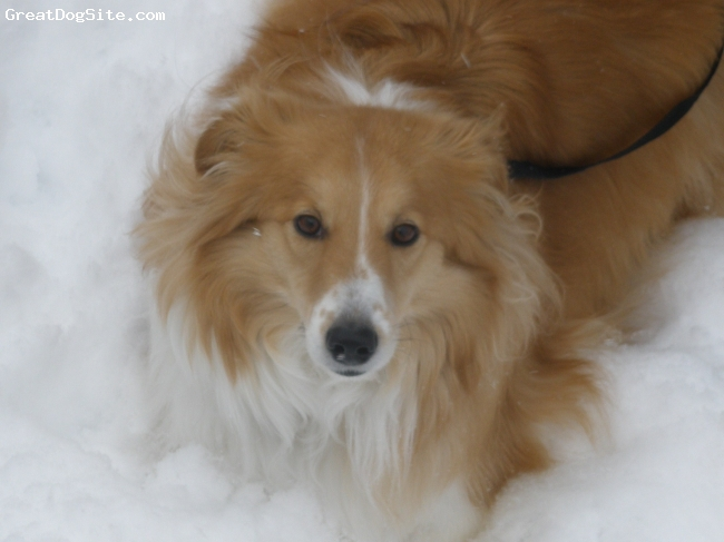 Eskland, 4, Tan/White, My 4 year old Eskland Duke. Loves to herd other dogs.