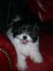 Ewokian, 6 months, Black and white