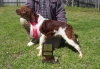 French Brittany, not specified, Tri color