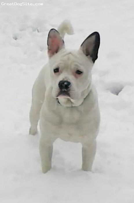 Frengle, 11 months, White, http://frengle.weebly.com/