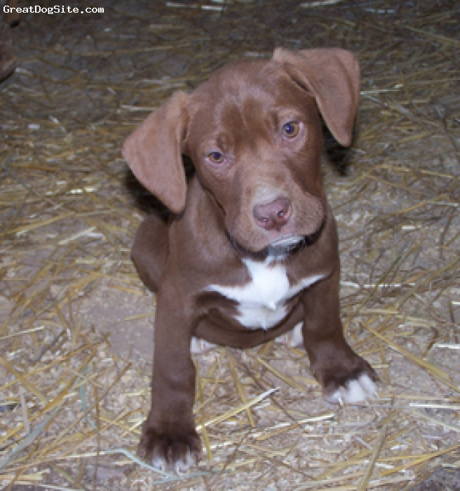 german shorthaired pointer lab mix puppies Quotes