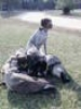 German Wirehaired Pointer, 17 months, liver / white ticked