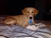 Gollie, 6 Months, Golden