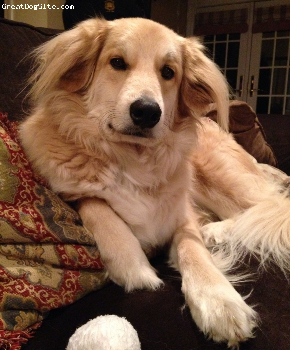 Gollie, 2, Ash Blond, Riley Is a cute puppy we rescued at the pound when she was 3 months old. She is playful, cute, cuddly and energetic. She can be in the laziest mood but when someone comes in the house she is all over them