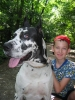 Great Dane, 7, Harlequin