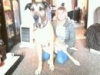 Great Dane, 4 years, Fawn