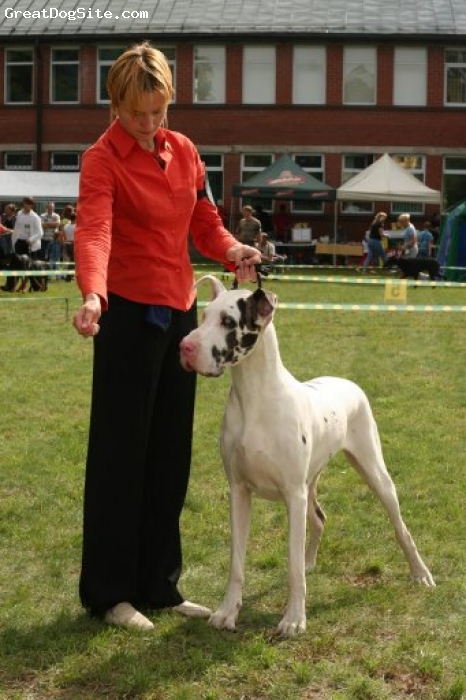 Great Dane, 3, harlequin, She is so lazy... But absolutly friendly temperament.