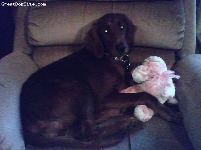 Irish Setter, 1, mahogany, This is Jazz with her pink dog. She will gladly play with your toys but dont come near hers!