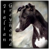 Italian Greyhound, Unknown, Black and White