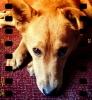 Jack-A-Ranian, 1, Ginger