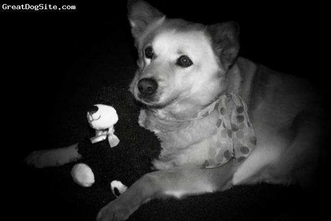 Jindo, 10, cream, She loves her teddy