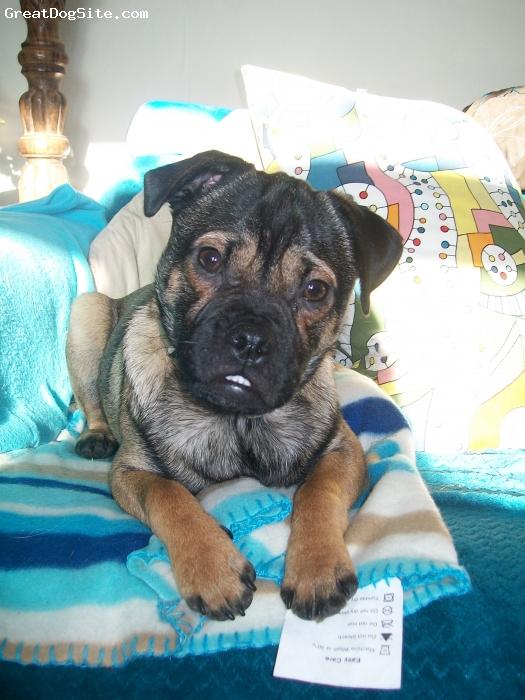 Jug, 1 and a half, caramel and black, a loving, friendly, cute boy. my best friend.